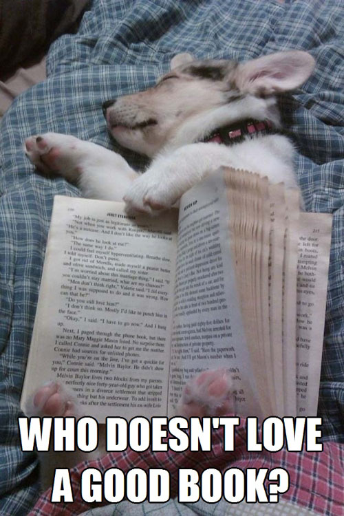 Who Doesn't Love a Good Book?