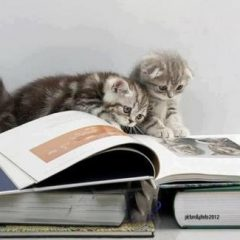 Cats Reading Books