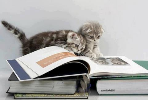 Cats Reading Books - pages that feature the wonders and fun of reading books and ebooks